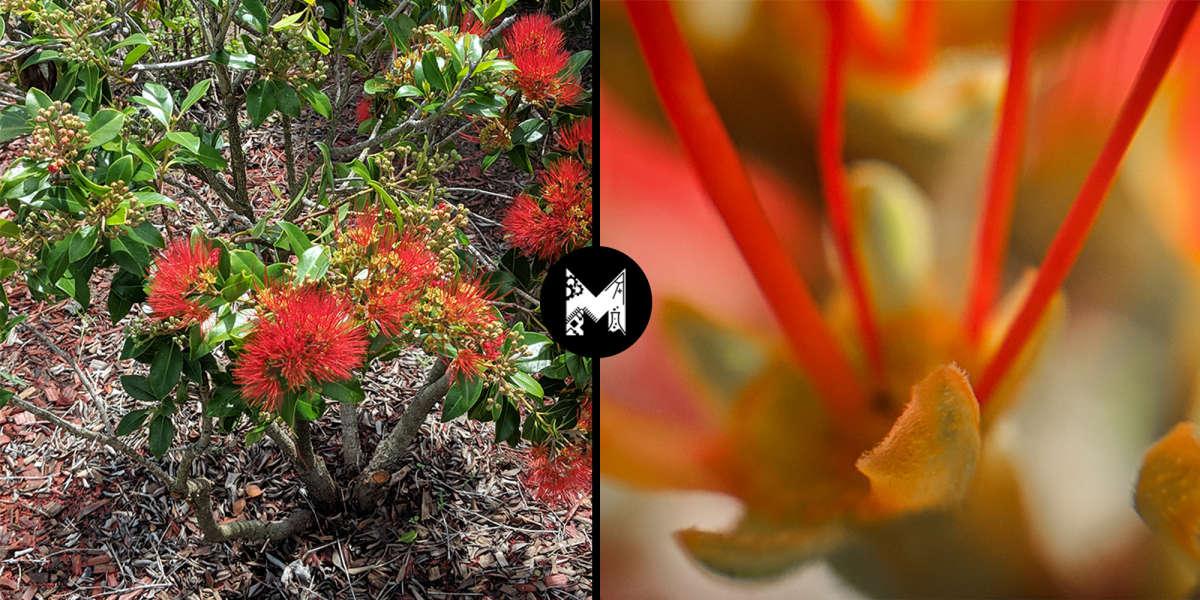 Kmart Smartphone Microscope Converter - Flower