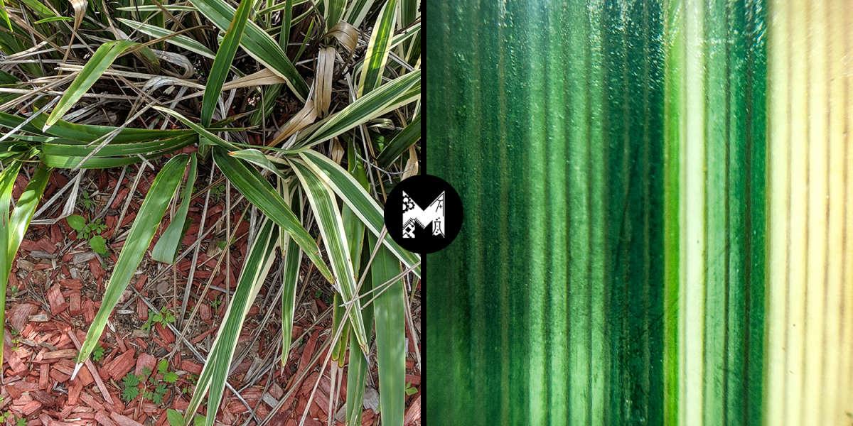 Kmart Smartphone Microscope Converter - Striped Plant